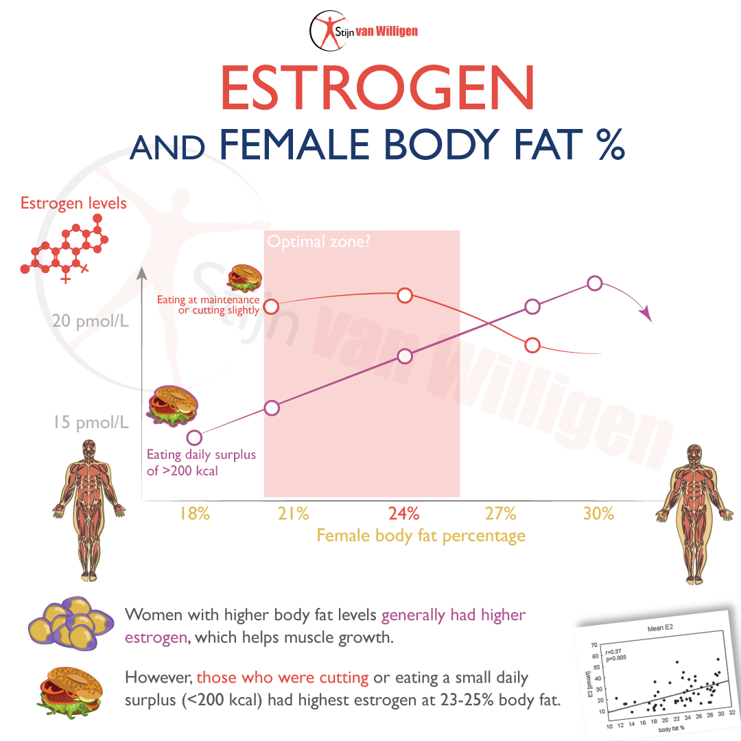 estrogen female body fat