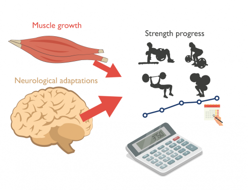 Progress calculator: are your gaining strength and muscle at an optimal rate?