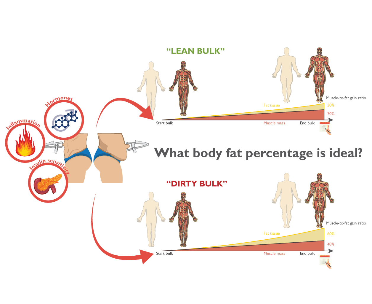what body fat is ideal for bulking