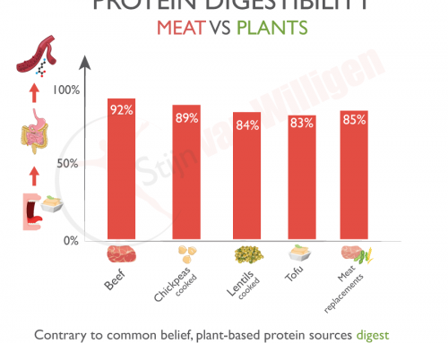 What is the difference in protein digestibility of certain foods?